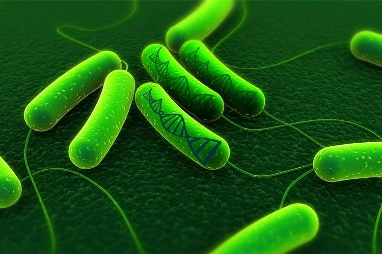 Phác đồ điều trị viêm dạ dày do vi khuẩn HP 1