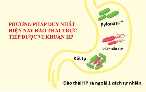 giải pháp đào thải vi khuẩn HP